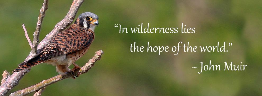 In wilderness lies the hope of the world. ~ John Muir.